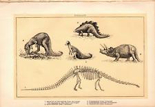 """1902 Antique Print Picture Dinosaurs Diplodocus Stegosaurus Triceratop 10X 6""""B4"""