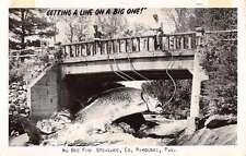 Rimouski Quebec Giant Fish Catch Real Photo Antique Postcard K62976