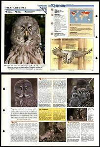 Great Grey Owl #171 Birds Wildlife Fact File Fold-Out Card