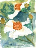 Matilija Poppies :  Signed LE Art Print:  Sandra Watercolors™ California