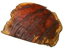 "Paela/Ckakte Viga Burl Slab/Bowl Blank/Turning Wood Block 6""x5""x1-1/2 4;, #147"