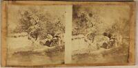 Paesaggio Albero Effetto Artistico c1870 Foto Stereo Vintage Albumina Con Vernis