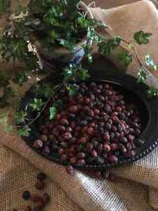 potpourri Unscented rosehips  2 cups botanicals  add your own fragrance supply