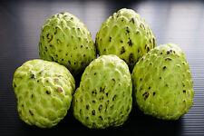 Sweet Annona Seeds Custard Apple Sugar Apple Cherimoya Fruit Dilicious
