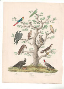 1866 Hand Coloured Engraving Bird Tree I, Buffon Natural History