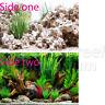 "Cloudstone Holey Rock/Wonderscape 12"" Inch Aquarium/Terrarium Background"