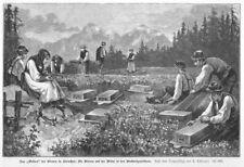 Imker, das Weiden der Bienen in Kärnten Original-Holzstich von 1887