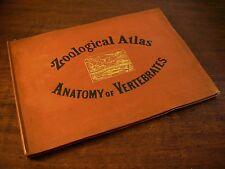 ZOOLOGICAL ATLAS Anatomy of Vertebrates Mc Alpine 1881 Antico Atlante Zoologico