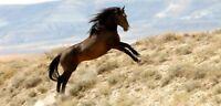 Horse Training Horses CD Taming Breaking Saddle 30 Books Equestrian Diseases