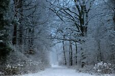 STUNNING WINTER FOREST PATH CANVAS PICTURE POSTER PRINT UNFRAMED 6288