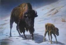 Buffalo with Calf vintage art