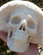 RARE HUGE REAL CORAL SKULL CARVING  5 inches tall !!  Weight: 2.95 kilo. NATURAL