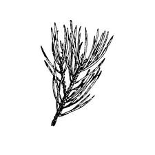 PINE BRANCH unmounted rubber stamp, winter, Christmas, nature, tree branch #19
