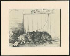 OLD ENGLISH SHEEPDOG ON SHOW BENCH 1940'S VERNON STOKES DOG PRINT MOUNTED