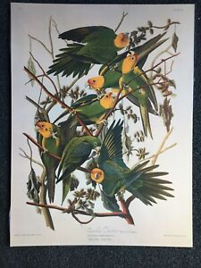 John James Audubon - Carolina Parrots - Vintage Lithograph Art Print