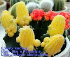 20 Cactus Seeds Indoor Multifarious Ornamental Plants. #4A