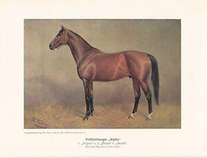 "Vollbluthengst ""Alpha"" Volkers Pferde Zuchtpferde Farbdruck 1925 Reprint"