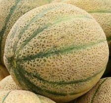 Cantaloupe Seeds Hales'S Best Jumbo 50+ Summer garden Vine fruit Free Shipping