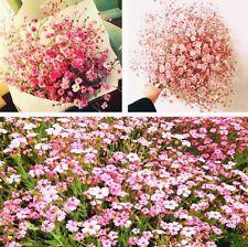 FD4201 Gypsophila Paniculata Flower Seeds Babys Breath Home Garden Decor 50PCs