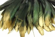 "25+ BLACK GOLD TIP IRIDESCENT ROOSTER COQUE TAIL FEATHER 6""L-8""L"