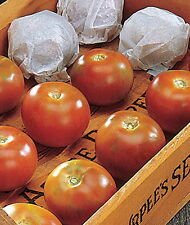 TOMATO LONG KEEPER - One of the best winter storage tomatoes!! (15 SEEDS)