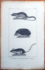 Hedgehog 1830s French Animal Print - Le Herisson, Le Lerot