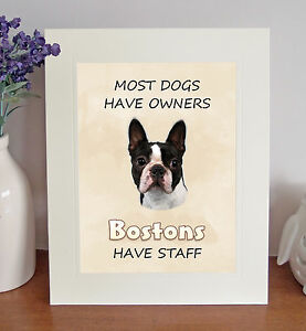 Boston Terrier 8 x 10 BOSTONS HAVE STAFF Picture 10x8 Dog Print Novelty Gift