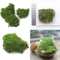 KQ_ AU_ Garden DIY Grass Lawn Fairy Dollhouse Moss Miniature Mushroom Craft Pot