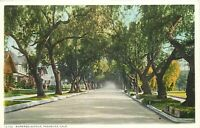 DB Postcard CA K159 Marengo Avenue Pasadena Tree Lined Street Bungalows Detroit