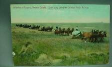 Battery of Reapers Western Canada Scene along CPR Railway Postcard Horse Drawn