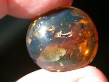 Beautiful BLUE Burmese Amber Fossil Gemstone with Worker Ant, Wasp Dinosaur Age