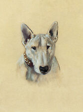 BULL TERRIER CHARMING DOG GREETINGS NOTE CARD LOVELY HEAD STUDY