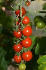 ☺100 graines de tomates cocktail