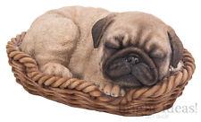 Vivid Arts-Pet Pals Cucciolo in scatola cesto & Pug-Carlino