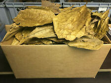 500 Gram A-Grade natural Indian Almond Catappa Leaves FREE SHIPPING - Shrimps