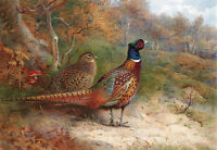 Oil painting beautiful birds in summer landscape 24x36inch canvas free shipping