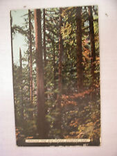 Vintage Postcard With A View Among The Big Trees In Eugene, Oregon Unused
