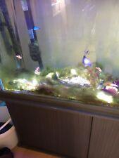 complete marine aquarium set up