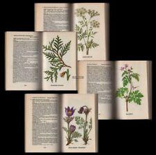 Heilpflanzen Hexenkraut Kräuter Zauberpflanzen Kräuterbuch Gesundheit