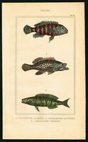 1844 Squirrel Fishes, Holocentrus Family, Hand-Colored Antique Print - Lacepede