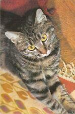 B15933 Chat Cat de race erupenne