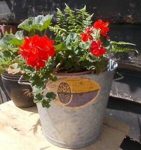 Vintage galvanised tub,bucket,pail,original French labels, plant display,garden,