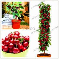 Big Mini Cherry Seeds Plants Tree Cherry Bonsai Dwarf Fruit Flores For As
