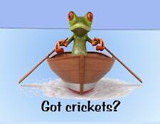 METAL REFRIGERATOR MAGNET Frog Rowing Boat Got Crickets Humor Amphibian Frogs
