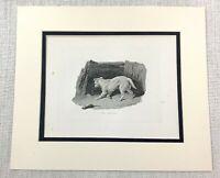 1843 Antico Stampa Terrier Cane The Rat Catcher Caccia Cani Vittoriano Incisione