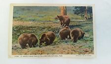 Vintage 1927 Yellowstone Park Postcard Haynes Grizzly Bears