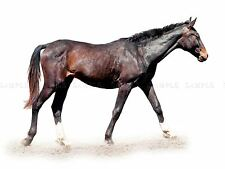 PHOTO COMPOSITION HORSE NATURE ANIMAL SLEEK FAST COOL POSTER PRINT BMP10105