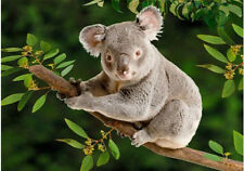 3D KOALA Lenticular Animated Postcard Greeting Card - Wildlife