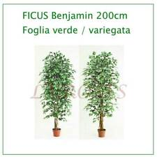 FICUS 200 cm Piante artificiali -  Pianta finta artificiale