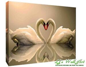 Loving Swans Animal  CANVAS WALL ART Picture Print